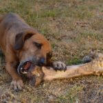 On Dogs and Bones