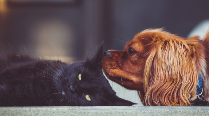 The Truth About Cats And Dogs…and Sales
