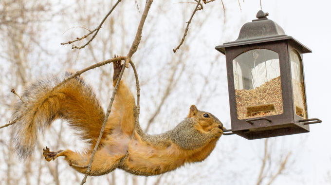 Go Nuts! Think Like A Squirrel